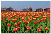 台灣之美~春暖花開:P1200723.jpg