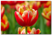 台灣之美~春暖花開:P1200729.jpg