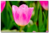 台灣之美~春暖花開:P1200744.jpg