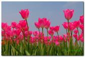台灣之美~春暖花開:P1200751.jpg