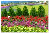 台灣之美_花東花海季 2014:P1180734.jpg