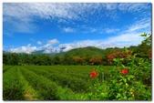 台灣之美~照片牆相簿:13.JPG