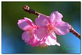 台灣之美~春暖花開:P1200220.jpg
