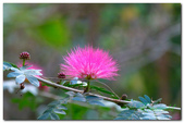 台灣之美~春暖花開:P1200352.jpg