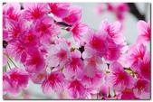 台灣之美~春暖花開:P1200517.jpg