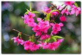 台灣之美~春暖花開:P1200536.jpg