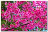 台灣之美~春暖花開:P1200597.jpg