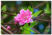台灣之美~春暖花開:P1200604.jpg
