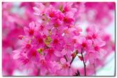 台灣之美~春暖花開:P1200617.jpg