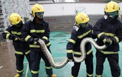 「攀枝花現4米長蛇」一不小心把牠挖出來了