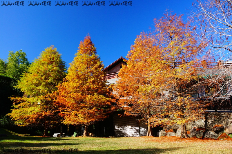 雲水渡假森林:DSC01080.JPG