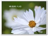 花想集(一)微距攝影篇:花想集(一)微距攝影篇030.jpg