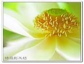 花想集(一)微距攝影篇:花想集(一)微距攝影篇001.jpg