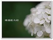 花想集(一)微距攝影篇:花想集(一)微距攝影篇003.jpg