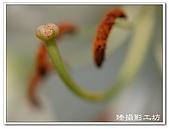 花想集(一)微距攝影篇:花想集(一)微距攝影篇004.jpg