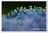 花想集(一)微距攝影篇:花想集(一)微距攝影篇011.jpg