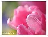花想集(一)微距攝影篇:花想集(一)微距攝影篇016.jpg