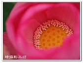 花想集(一)微距攝影篇:花想集(一)微距攝影篇017.jpg