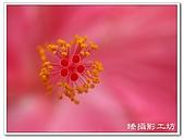 花想集(一)微距攝影篇:花想集(一)微距攝影篇018.jpg