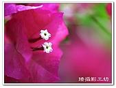 花想集(一)微距攝影篇:花想集(一)微距攝影篇019.jpg
