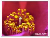花想集(一)微距攝影篇:花想集(一)微距攝影篇020.jpg