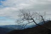 奇萊南峰.南華山:奇萊南峰.南華山 (15).JPG