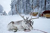 極地芬蘭 2013-2-2:F056 聖誕老人村.jpg