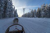 極地芬蘭 2013-2-2:F095 狗拉雪橇.jpg