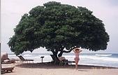 夏威夷 1998-09:夏威夷 03