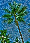 帛琉 2011-04-03:P012 PPR.jpg