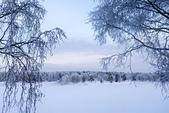 極地芬蘭 2013-2-2:F099 狗拉雪橇.jpg