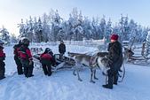 極地芬蘭 2013-2-2:F077 馴鹿雪橇.jpg