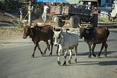 印度- 第5-8天 2012-11-08:I185 路途中.jpg