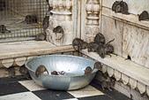 印度-第1-4天 2012-11-08:I116 老鼠廟.jpg