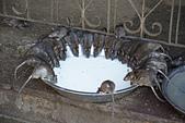 印度-第1-4天 2012-11-08:I117 老鼠廟.jpg