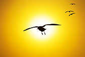 七彩雲南 之 東川, 羅平, 彌勒, 元陽 2014-2-27:Q013 滇池海埂大壩.jpg