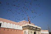 印度-第1-4天 2012-11-08:I123 老鼠廟.jpg