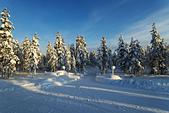 極地芬蘭 2013-2-2:F090 狗拉雪橇.jpg