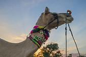 印度-第1-4天 2012-11-08:I056 沙漠騎駱駝.jpg