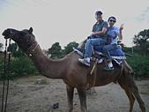 印度-第1-4天 2012-11-08:I059 沙漠騎駱駝.jpg