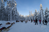 極地芬蘭 2013-2-2:F092 狗拉雪橇.jpg