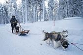 極地芬蘭 2013-2-2:F093 狗拉雪橇.jpg