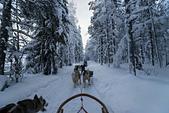 極地芬蘭 2013-2-2:F094 狗拉雪橇.jpg