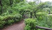 仙台:つる植物区, 野草園, 仙台市. 2014/05/22.