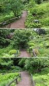"""仙台:""""高山植物区"""", 野草園, 仙台市. 2014/05/22."""