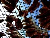 2009澎湖風光:CIMG4332.jpg