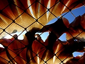2009澎湖風光:CIMG4335.jpg