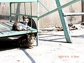 2009澎湖風光:CIMG4348.jpg
