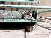 2009澎湖風光:CIMG4353.jpg