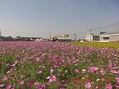 假日去私房景點看花海囉~:CIMG3150.JPG